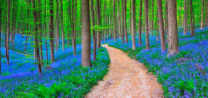 Primavera Bélgica – Hallerbos