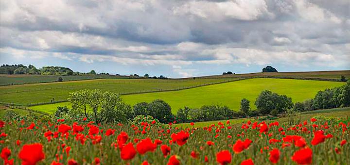 Primavera Inglaterra – Northumberland