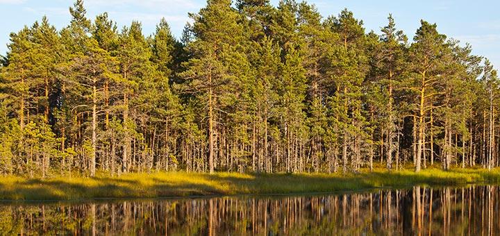 Destino: Estonia